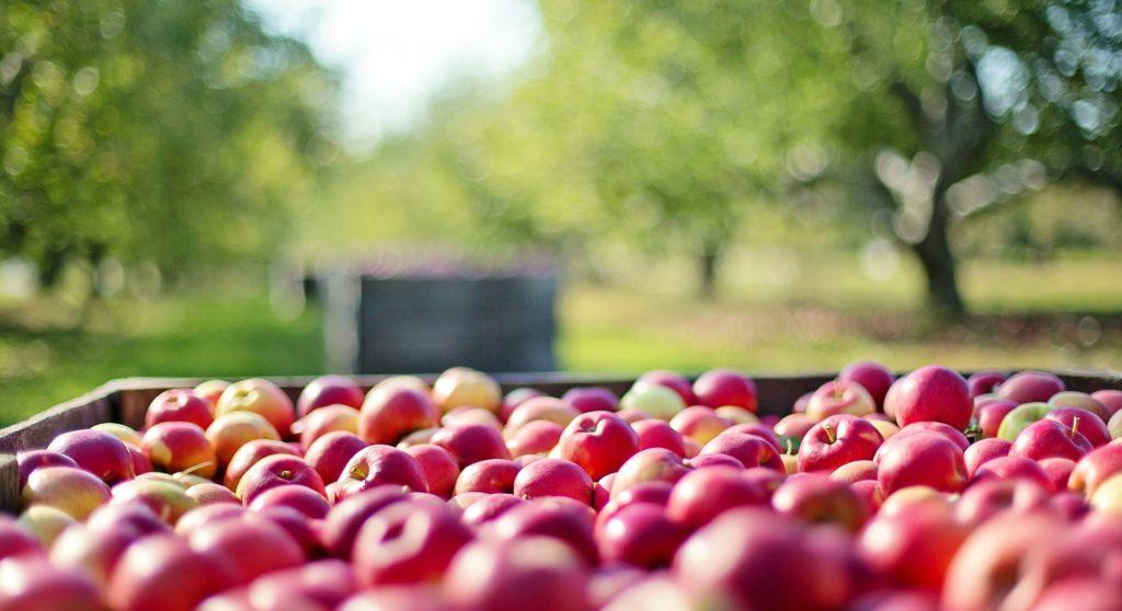 Gastronomi æble billede